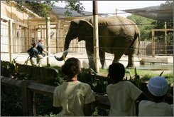 Children watch as Dallas zoo keepers Gavin Eastep, right, feeds treats to Jenny, an African elephant as zoo keeper Reanna Streater cools her with a spray of water,Tuesday, July 29, 2008. Zoo officials plan to send Jenny to a drive-through park in Mexico that they say would be a perfect place for her to live. But a Dallas city councilwoman and several animal activists say that would be a horrible home for Jenny because she gets frightened by cars and deserves a more peaceful existence. (AP Photo/ Donna McWilliam)