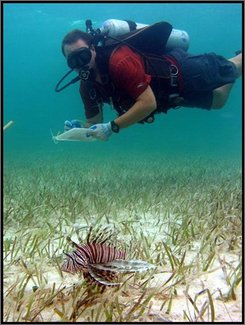 In this image released by Oregon State University, a lionfish swims near a diver taking notes, off Lee Stocking Island, Bahamas in July 2007. The lionfish, a vibrantly colored spiny and venomous predator from the western Pacific, is rapidly spreading in the Caribbean's warm waters, according to marine biologists who are studying the phenomenon. (AP Photo/Mark Albins/Oregon State University)