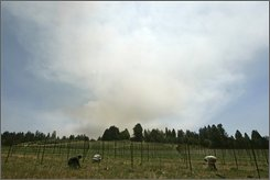 In this June 12, 2008 file photo, vineyard workers work at replanting as smoke billows from a wildfire in the background near Bonny Doon, Calif. California winemakers are bringing in the grape harvest this month after a challenging year that started with unusual frosts and moved on to smoky summer wildfires. So far, industry observers say it looks like the crop will be lighter than usual but the fruit that is coming in is good.  (AP Photo/Eric Risberg, File)