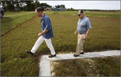 Ed Grygleski and his father Ed Grygleski, Sr., walk out of a cranberry bog Thursday, Sept. 25, 2008, near Tomah, Wis. Ed Grygleski, Sr., 69, began breeding cranberry vines to create new hybrids in the 1970s and developed one, called GH1, used by growers in Wisconsin and along the eastern seaboard from Canada to New Jersey. Wisconsin already produces nearly 60 percent of the nation's cranberries, but with food companies calling for more fruit to meet growing worldwide demand, farmers here are trying to increase their efficiency and harvest. (AP Photo/Morry Gash)