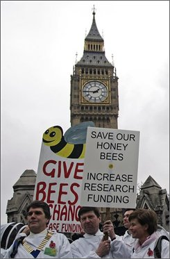 Bee keepers gather  outside the Houses of Parliament to march to Downing Street to protest against the cut in research funding to protect  honey bees, in London, Wednesday, Nov. 5, 2008. Scientists have been unable to determine the cause of a problem, known as Colony Collapse Disorder which has seen a dramatic decline in the number of  honey bees. Possible explanations include pesticides, a new parasite or pathogen, or a combination of immune-suppressing stresses. (AP Photo/Sang Tan)
