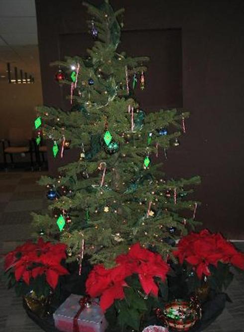 Christmas tree live potted christmas trees live potted christmas trees