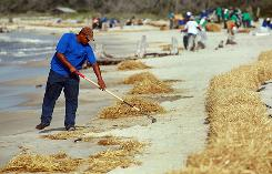 Workers clean up hay that was placed to protect the beach from oil and tar balls if they wash ashore from the Deepwater Horizon site Saturday in Dauphin Island, Alabama.