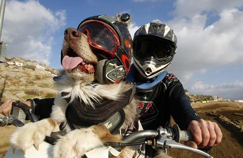dog biker