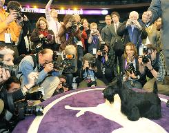 Scottish terrier Sadie poses for the press after winning Best in Show at the 134th Westminster Kennel Club Dog Show at Madison Square Garden in New York, Feb. 16.
