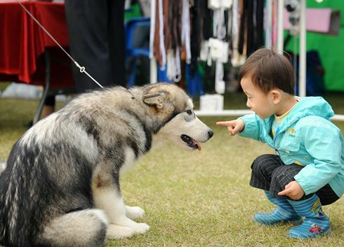 Ποια είναι η θεραπεία για διαβητικό σκύλο;
