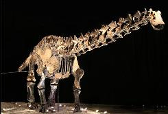 Mounted skeleton of Amphicoelias brontodiplodocus in Mexico.