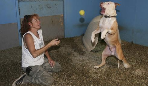 Pit Bulls and Parolees Dogs