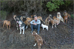 "The leader of the pack: Dog trainer and author Cesar Millan says that most of the dogs he works with ""have an appointment to die."""