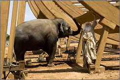 American Humane Association on board: Evan Almighty stars Steve Carell and 200 animals.