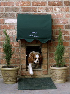 There's no place like home: One of Ron and Kathi Sturgeon's Cavalier King Charles spaniels, Dixie, leaves the dog room  which has its own address  to go into the backyard of the house in Colleyville, Texas.