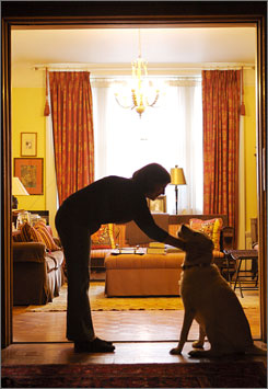 Pet connection: Anna Quindlen pets Bea, her yellow Labrador. Quindlen has written Good Dog. Stay.