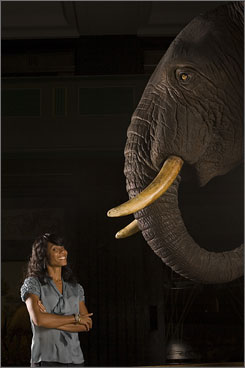 Jada Pinkett Smith checks out the African animals, like the ones in her new film, Madagascar: Escape 2 Africa, at the New York Museum of Natural History in Manhattan. Pinkett Smith returns in the sequel to voice Gloria the hippo.
