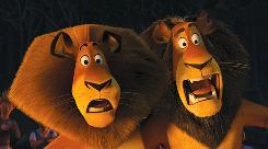 Alex the lion, left, voiced by Ben Stiller, and Zuba, voiced by the late Bernie Mac, enjoyed a profitable weekend at the box office in Madagascar: Escape 2 Africa.