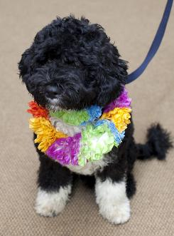 The Obamas' new dog, Bo, is a 6-month-old Portuguese water dog. &quot;He's got star quality,&quot; President Obama said. 