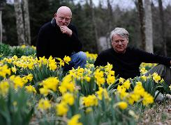 Early bloom: Garden designers Joe Eck, left, and Wayne Winterrowd's daffodil meadow is among the sights on their 7 acres in Vermont.