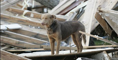 Sept. 15, 2005: A dog stands on top of the wreckage of a home on 2nd Street at Oak Avenue in Gulfport, Miss., in the aftermath of Hurriicane Katrina. As columnist Sharon Peters discovered, the end of one disaster is the beginning of a different kind of horror.