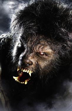 Benicio Del Toro is the man, er, the wolf in the remake of The Wolfman.