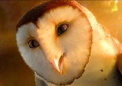 Director Zack Snyder depended on footage of a real owl, Fluffy, to show him and his crew how to bring the birds to life in the animated tale Legend of the Guardians: The Owls of Ga'Hoole.