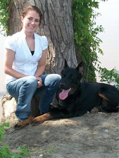 Hollie Scott is a University of Missouri College of Veterinary Medicine student who has celiac disease. Her dog Elias is a champion Beauceron and a gluten-detecter extraordinaire. The smallest amount of gluten, found in all kinds of food items, can trigger a painful attack in Scott.
