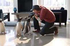Jim Carrey plays opposite Gentoo penguins from a Montreal zoo in Mr. Popper's Penguins.