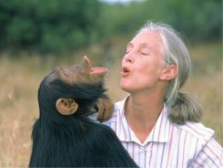 A new documentary about Jane Goodall includes newly discovered footage of her earlier years and guest appearances by actors Angelina Jolie and Pierce Brosnan.