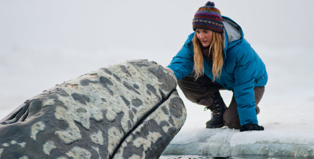 Based on a true story, 'The Big Miracle' stars Drew Barrymore as Rachel, an animal-loving volunteer, who is racing to save a family of gray whales from rapidly forming ice in the Arctic Circle.