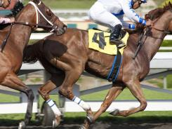 HBO says a horse used for the racetrack drama Luck was euthanized after suffering an injury on Tuesday. It's the third death of a horse to occur during production of the series.