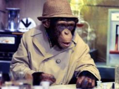 All 17 episodes of 'Lancelot Link: Secret Chimp' are now available in a three-DVD set.