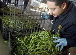 A Customs and Border Protection agricultural specialist inspects green beans at the Mariposa Port of Entry in Nogales, Ariz., last month.