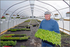 Organic farmer Bruce Pape works in his greenhouse in Milford, Del.