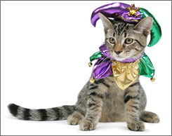 Bruce might be happier in his court-jester costume if it came with tuna.