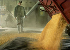 An official at a farmers' cooperative watches as corn is unloaded at an Iowa distribution center last year. Surplus stores of such crops are increasingly rare. 