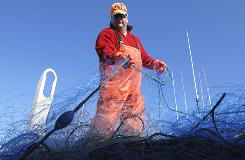 Frank Fulford of Gloucester, Mass., who crews aboard the Gloucester-based fishing boat Ryan Zachary, airs out gill nets after returning to port.