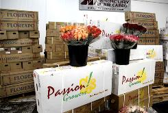 Fresh flowers from Colombia and Ecuador sit in Mercury Air Cargo's new 12,700-square-foot refrigeration unit at Los Angeles International.