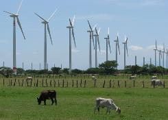 Wind turbines tower over cattle near the town of La Venta, in Mexico's Isthmus of Tehuantepec. Powerful wind blasts the isthmus.
