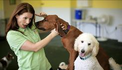 Amy Nichols greets guests at Dogtopia day care center in Tyson's Corner, Va.