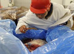 Enrique Rios checks temperatures of beef at Beef Packers in Fresno, which began new safety measures after recent recalls.