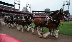 The famous Clydesdales make their way around the field before the Major League Baseball 2009 All-Star Game.