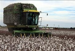 A cotton stripper works its way through a field in Lubbock, Texas. The Texas economy is larger than that of all the Scandinavian nations combined.