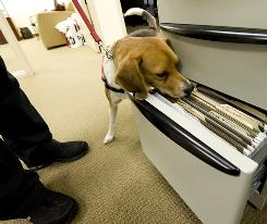 Max, a 4year-old beagle being trained to sniff out bedbugs, finds them in a file drawer, in a vial.
