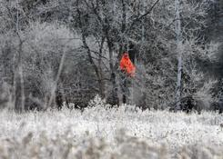 A hunter surrounded by frost-caked brush and wilderness waits for deer in a tree stand near Dale, Wis., in this file photo.