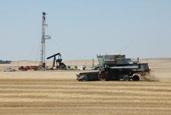 A combine cuts durum wheat near an oil well in Tioga, N.D. in this file photo.