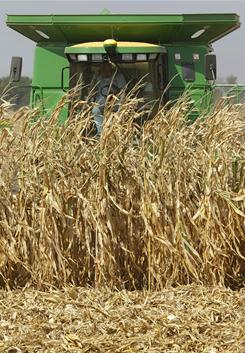 Farmers harvest corn crops near Monticello, Ill. U.S. reserves of corn have hit their lowest level in more than 15 years,