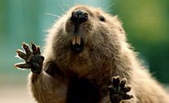 In Bridgestone ad, a beaver repays a good deed.