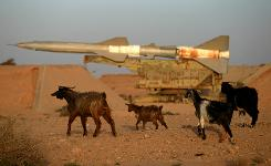 Goats walk past a surface-to-air Missile on Thursday at an abandonned Libyan air force base in the eastern dissident-held city of Tobruk.