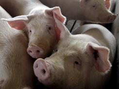 Hogs are seen at a finishing facility in Auxvasse, Mo., in 2009.