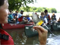 Lesley Bulluck, a VCU biologist, holds a prothonotary warbler for students from Robious Middle School who were on a James River canoe trip  May 23, 2011.Virginia class size has improved.