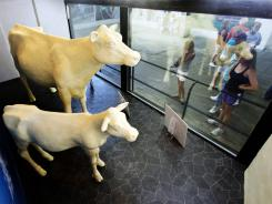 Ohio state fairgoers look at butter cow and butter calf sculptures at the fairgrounds in Columbus on July 26, 2011.