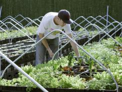 Zach Pickens, manager of Riverpark Farm, tends to his crops Nov. 15, in a New York City lot.